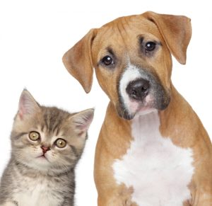 Pets as Property: A Change of Viewpoint in the Courts by Debra Rubin